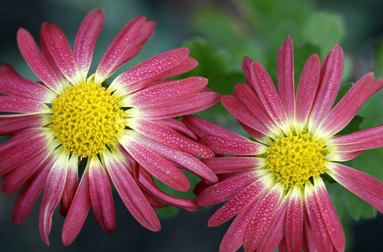 Die richtigen Blumen für den Herbst