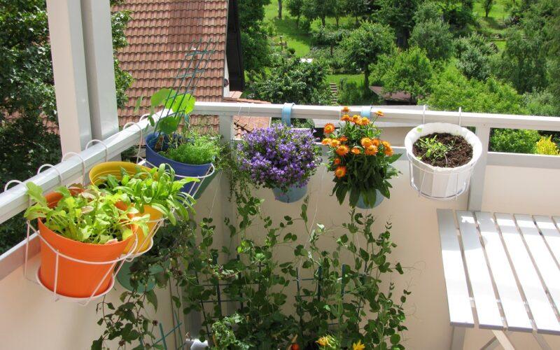 Wie Balkonpflanzen am besten überwintern